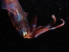 Squid - Flickr - Photo Sharing!