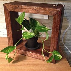 Build a Plant Grow Box, cute idea and helps keep plants inside alive when it's freezing outside!