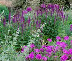 Salvia 'Caradonna' with Verbena 'Homestead Purple', Nepeta, and Allium; by Freda Cameron at Defining Your Home