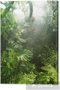 Tropical rainforest Canvas Print ✓ Easy Installation ✓ 365 Days to Return ✓ Browse other patterns from this collection! Nature Photography Tips, Ocean Photography, Wildlife Photography, Wedding Photography, Tropical Landscaping, Landscaping With Rocks, Landscaping Ideas, Tropical Forest, Tropical Plants