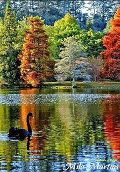 ☼ black swan