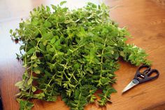 Quick-Drying Oregano - How to preserve herbs by quick drying in the oven