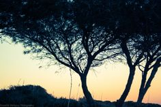 trees by Rossella Sferlazzo on 500px