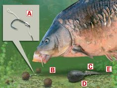 How to tie a simple helicopter rig for specimen fishing