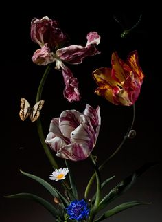 Bas Meeuws - Per van der Horst Gallery Still Life Images, Still Life Art, Floral Photography, Still Life Photography, Art Floral, Botanical Illustration, Botanical Prints, Flower Art, Flower Collage