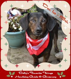 Dolly's holiday giveaway going on now through 12/15! | prizes | giveaway | holidays | Christmas | dog gifts |