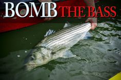 Fighting a striped bass is like fighting a person. The take feels like a reverse punch, like a human being grabbed your line and hauled back on it as hard as they could. I've seen unprepared anglers have the rod jerked right out of their hands. To win this...