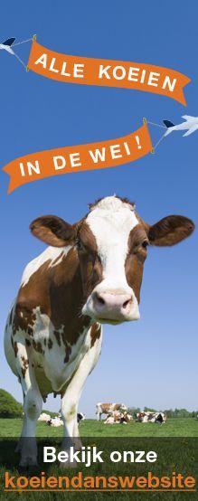 koeien te koop (koeien van de invasie 2014)