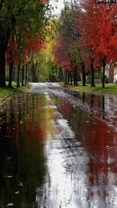 Autumn seems much more beautiful and magical when combined with rain! Its colours are reflected in the wet road. Nice and neat street on a calm rainy autumn day. Rainy Night, Rainy Days, Rainy Morning, Winter Gif, Beautiful Places, Beautiful Pictures, I Love Rain, Autumn Rain, Dancing In The Rain
