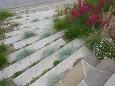 Plant between steps. Here, low-growing blue fescue and perennials are planted between steps. They effectively soften the steps, as the steps become a garden in themselves. (Consider the safety of plantings like these in your garden before implementing them.)