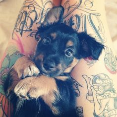 (Source: tattoos-and-modifications, via vulpixis)cuteness level extreme! #ink