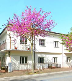 Itálie, Lignano Sabbiadoro, Residence Bianca. Dovolená u moře, ubytování v apartmánu, pobyt se psem povolen. TV, klimatizace, wifi, parkovací místo.