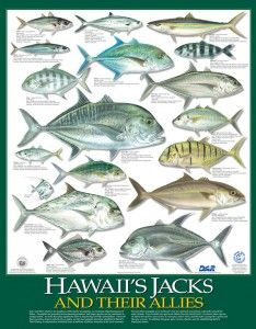 Kauai Reef | Franko's Fabulous Maps of Favorite Places ...