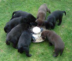 Můj pes : Výživa : Výživa štěněte
