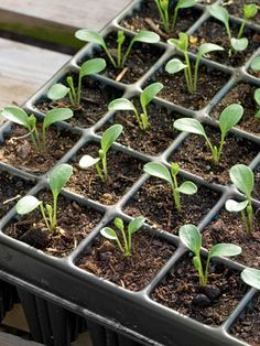 7 easy tips to start seeds in the winter. (Hint: You'll start in February!) So soon!