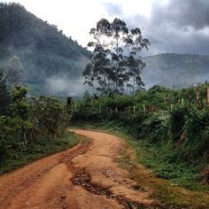Uganda beyond gorilla trekking. Suggestions on places to visit and experiences in Uganda outside of visiting mountain gorillas.