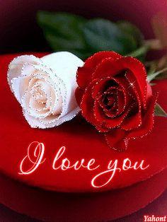 JUNGLE OF LOVE - Community - Google+