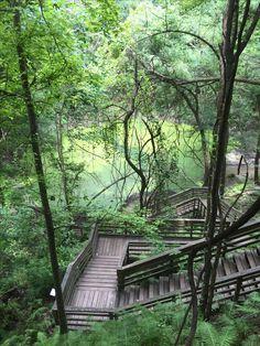 Devil's Millhopper Florida State Park