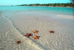 Starfish on a beach in the Bahamas Dream Vacations, Vacation Spots, Oh The Places You'll Go, Places To Travel, Bavaro Beach, Beautiful Beaches, Beautiful World, Beautiful Beautiful, Beautiful Images