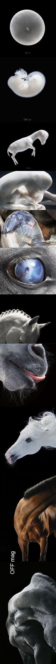 tim flach - horses _________ http://offmag.blogspot.com.es/2012/04/tim-flach-horses.html