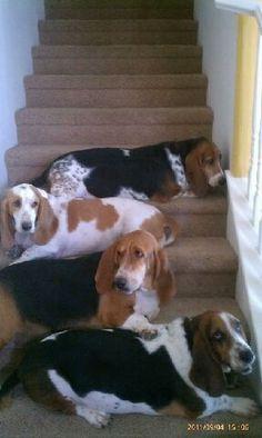 ...no way to get past them... ha! Woody (RIP), Cody, Daisy, & Jakey