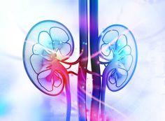 Kidney damage first signs of kidney failure,how to keep kidney strong kidney infection symptoms in men back pain,kidney transplant 3 kidneys natural bladder cleanse. Kidney Detox, Kidney Cleanse, Kidney Health, Kidney Infection, Urinary Tract Infection, Med Student, Purifier Foie, Kidney Anatomy, Nursing