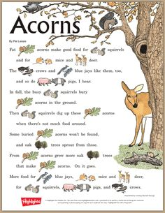 Acorns, Rebus Story