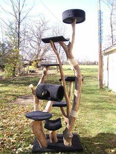 cat trees made from trees | Cat Tree Kingdom - custom trees