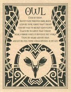 Owls here = lawyers