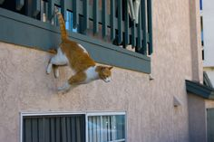 """The pinner writes """"The cat prefers to leave the house via my balcony, and this is how he does it."""" ---"""