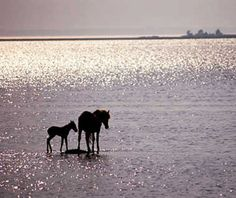 My favorite vacation spot - Chincoteague Island in VA...go there!