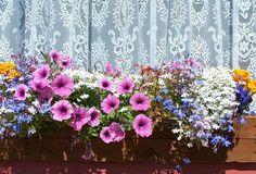 #Frühling mit #Blumenkästen bei Wohnen mit Klassikern