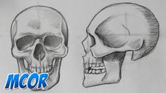 Como Dibujar el Craneo de Frente y Perfil | Anatomia