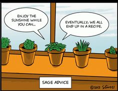 """""""Sage advice"""" Just a little organic humour to brighten up your day Enjoy The Sunshine, Science Humor, Biology Humor, Garden Quotes, Friday Humor, Food Humor, Food Jokes, Funny Food, Inevitable"""