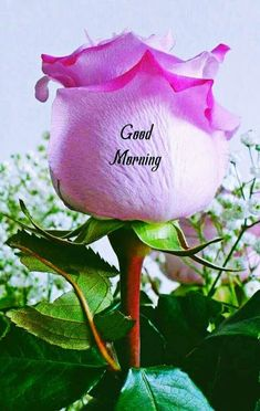 Good Morning Images For Whatsapp Good Morning Flowers Quotes, Good Morning Beautiful Pictures, Good Morning Roses, Good Morning Image Quotes, Good Morning Cards, Good Morning Beautiful Images, Good Morning Friends, Good Morning Greetings, Good Morning Good Night