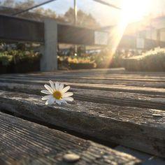 #goodmorningsunshine by tracyshutterbean