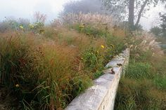 Autumn textures in the garden: froth and wands. Plant Design, Garden Design, Planting Plan, Picture Credit, Ornamental Grasses, Garden Planning, Mother Nature, Wild Flowers, Landscape