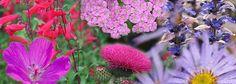 Pollinators border plan