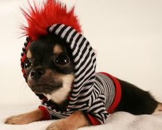 Tiny Teacup Punk Red Mohawk Stripe chihuahua by PetitDogApparel, $24.00