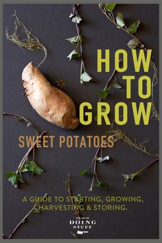 A Start to Finish Guide to Growing Sweet Potatoes.