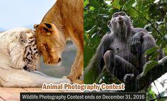 Animal Behavior Photo Contest 2016 - submissions open till Dec 31 2016  http://webneel.com/photography-contest-competition | Design Inspiration http://webneel.com | Follow us www.pinterest.com/webneel