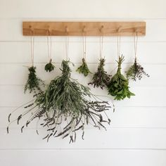 sorry brooms and aprons✌🏼it's time to make more four thieves spray. doing one batch with fresh herbs and another made with dried herbs. Herb Drying Racks, Drying Herbs, Thieves Spray, Hanging Herbs, Herbal Magic, Ficus, Dried Flowers, Indoor Plants, Farmhouse Decor