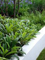 border-plantings-white-wall
