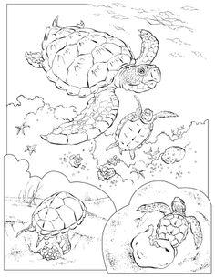 Ocean Animals Coloring Pages | Turtles Ocean Animals Coloring Pages And Sheets