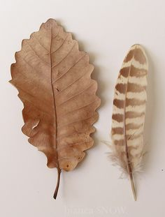 leaf and feather small wm. bianca snow.