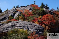 The colors of autumn stand out even more when they contrast with the grey boulders and rock faces all around Grandfather Mountain.
