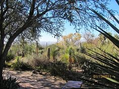 Arizona Sonora Desert Museum...simply magical...really a nature preserve that is a zoo...incredible day here