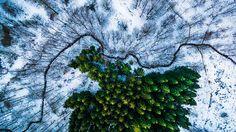 1st Prize Winner – Category Nature Wildlife: Kalbyris Forest Denmark