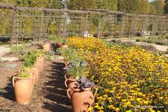 The Reggia of Venaria Reale, Turin, Piedmont, Italy, herbal garden