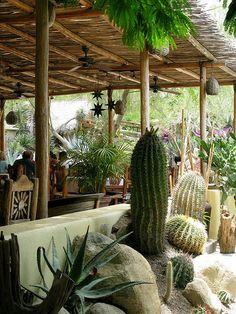 Los Arboles, Todos Santos Baja California Sur.